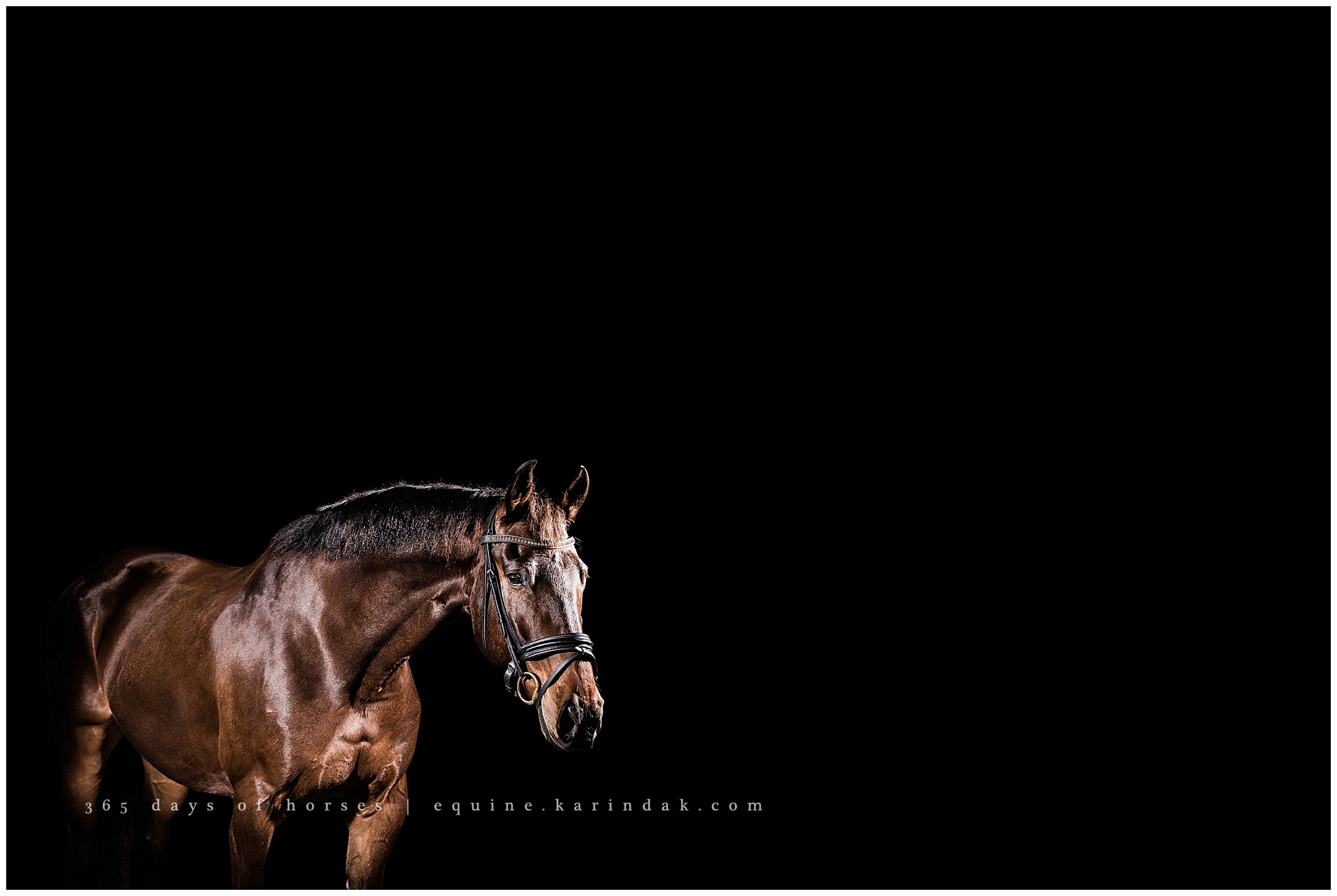 Austin Equestrian Center Equine Photographer Bentley The